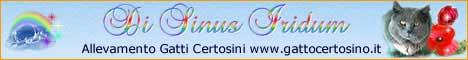 banner_gattocertosino
